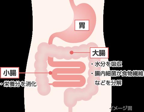 下痢のメカニズム|下痢止め薬 トメダインコーワ|Kowa